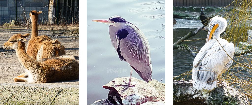 Pelikan und Fischreiher
