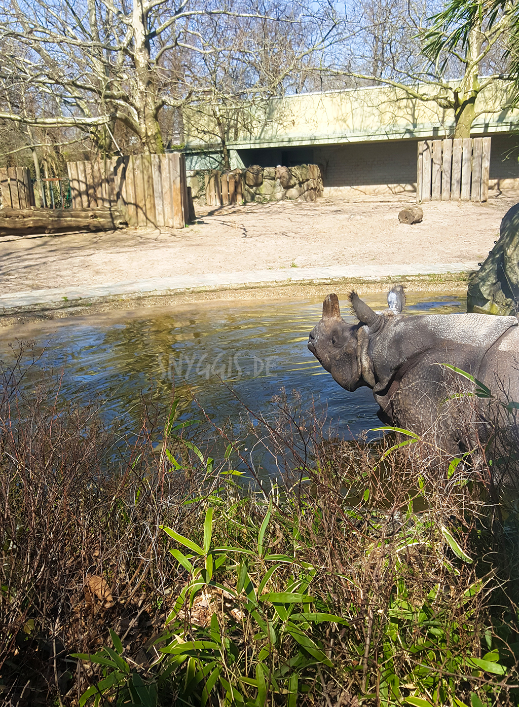 Nashorn im Zoo