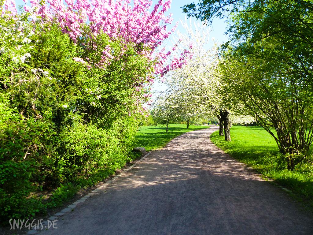 Kirschblüten Eingang Britzer Garten