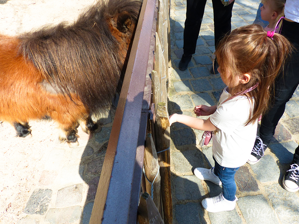 Pony füttern