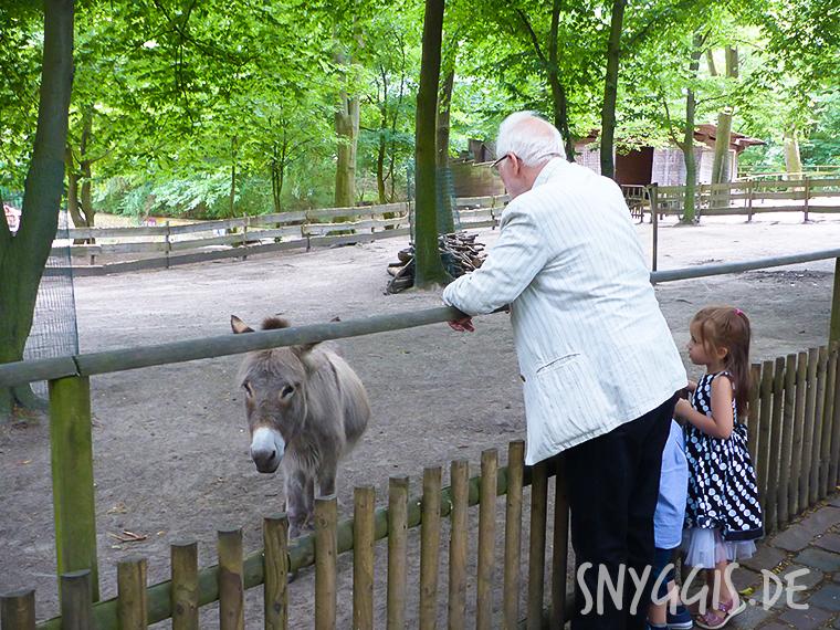 Schweinen und Ponys Hallo sagen