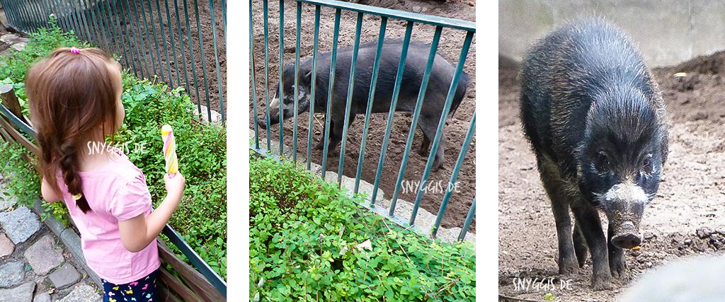 Pustelschweine