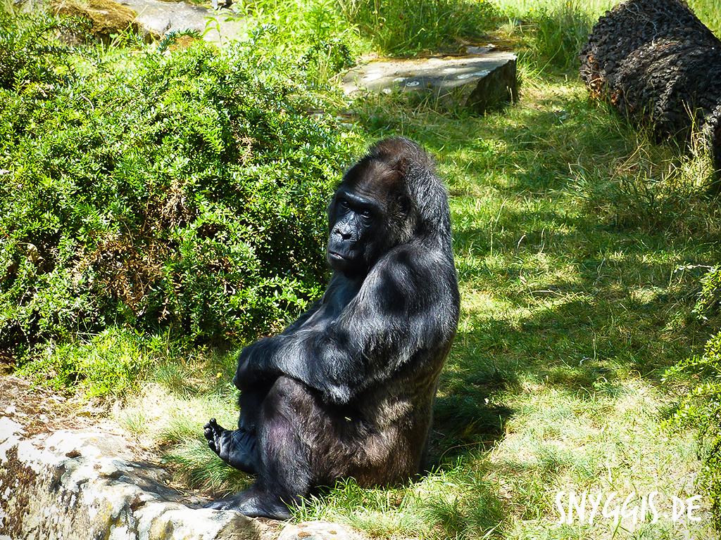 """Gorilladame """"Fatou"""""""