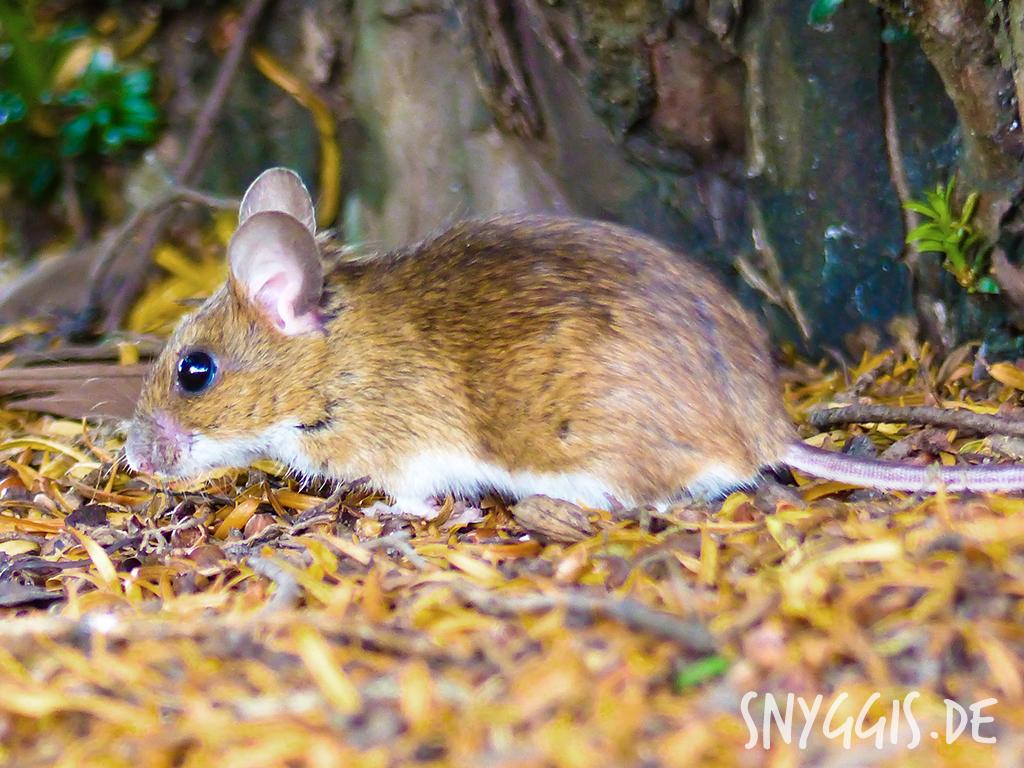 eine süße kleine Maus entdeckt