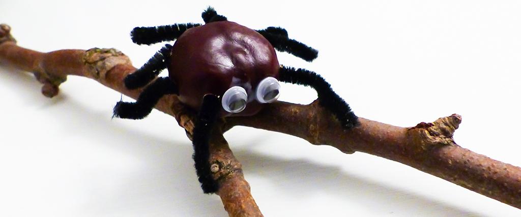 Kastanien-Spinne