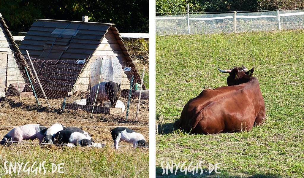Kühe, Schweine, Ponys und Ziegen