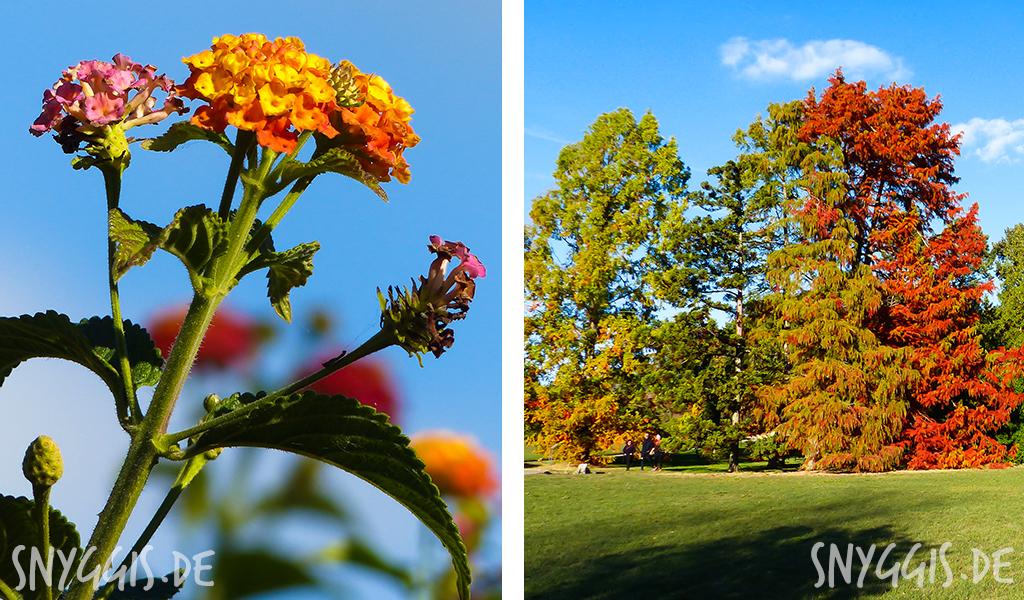 bunter Blätterwald und Herbstblüten