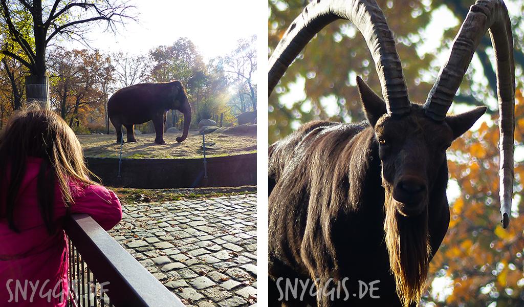 die Elefanten und Steinböcke