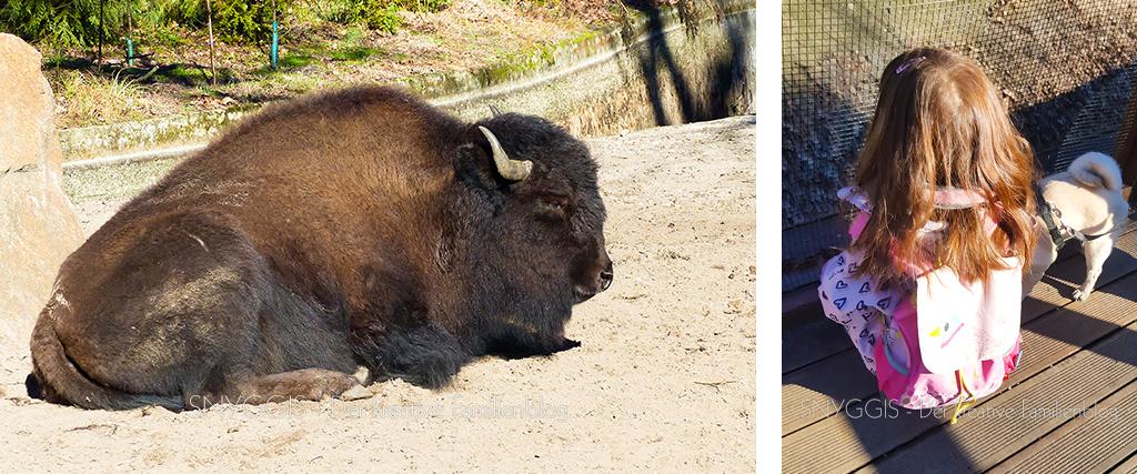wir starten bei den Büffeln