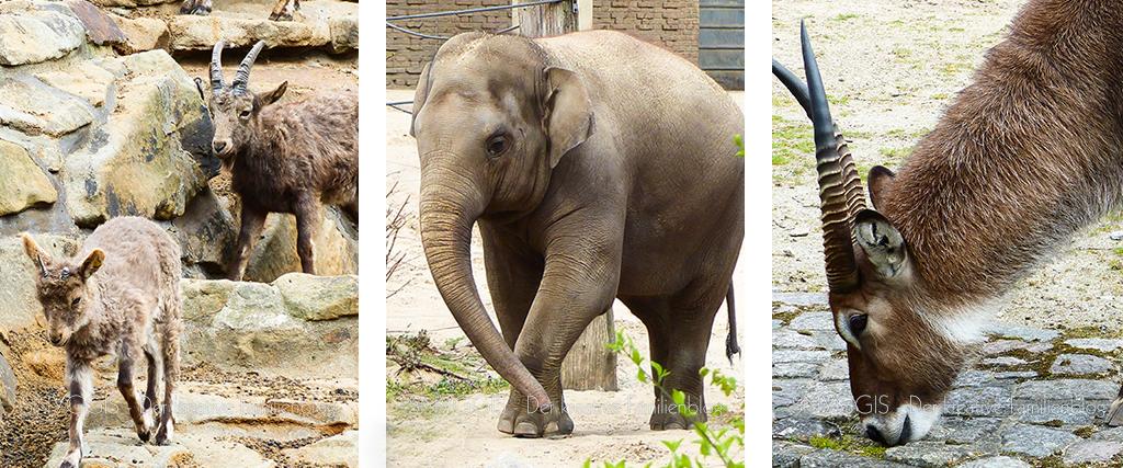Elefanten Steinböcke Antilopen und Co