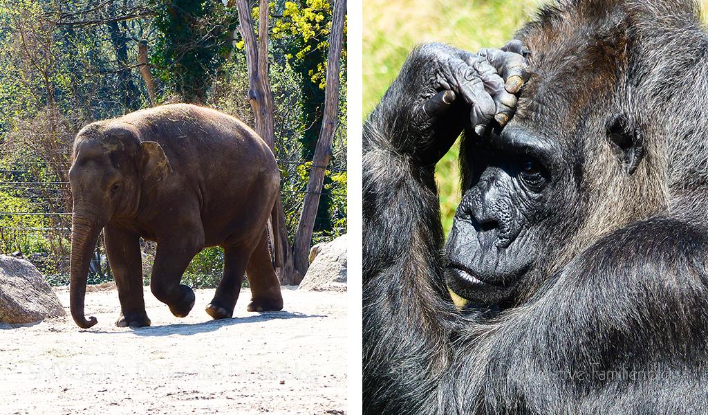 Elefanten und Fatou