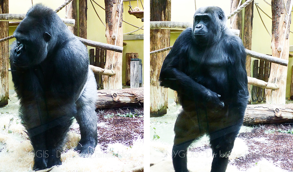 die anderen Gorillas