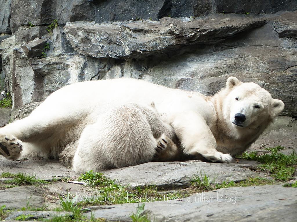 Hertha und Mama kuscheln