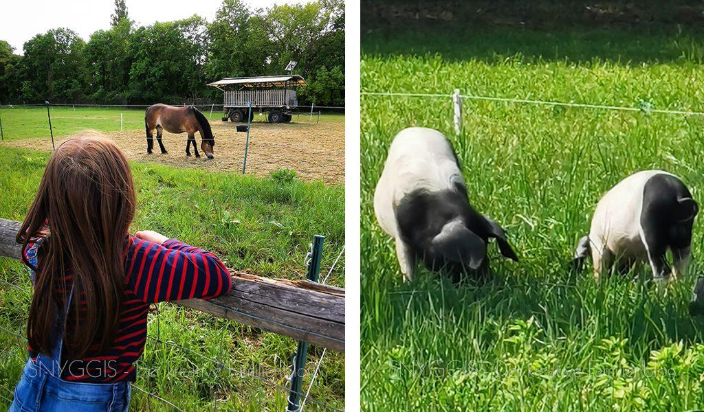 Pony-gucken