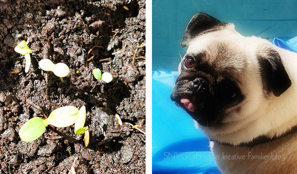 Überaschung-Blumen-und-Wilma