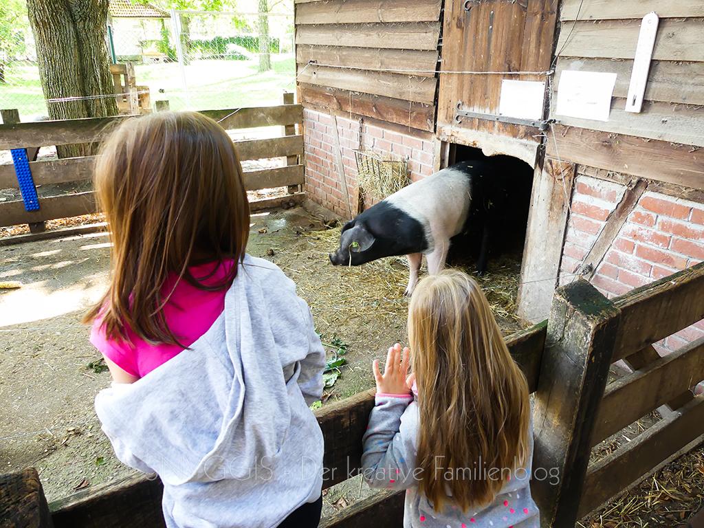 die-Kinder-locken-das-Schweinchen-raus