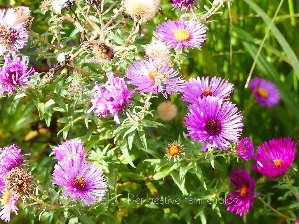 Blumen-und-Biene