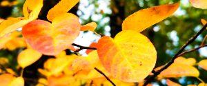 Herbst Wochenende