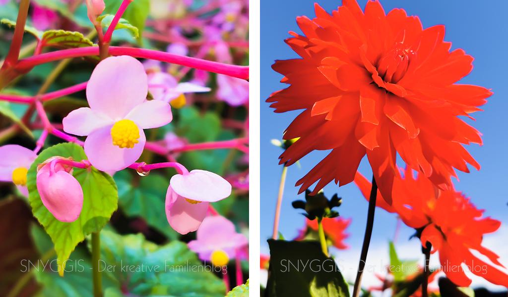 noch-mehr-Pflanzen