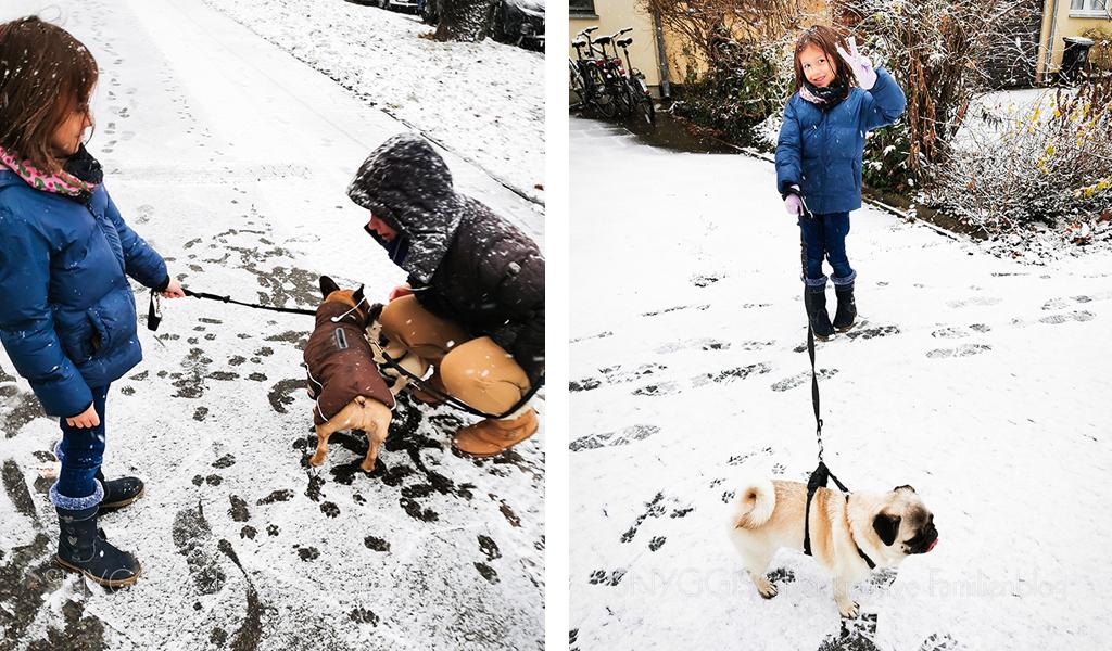 Gassi-gehen-bei-Schneefall