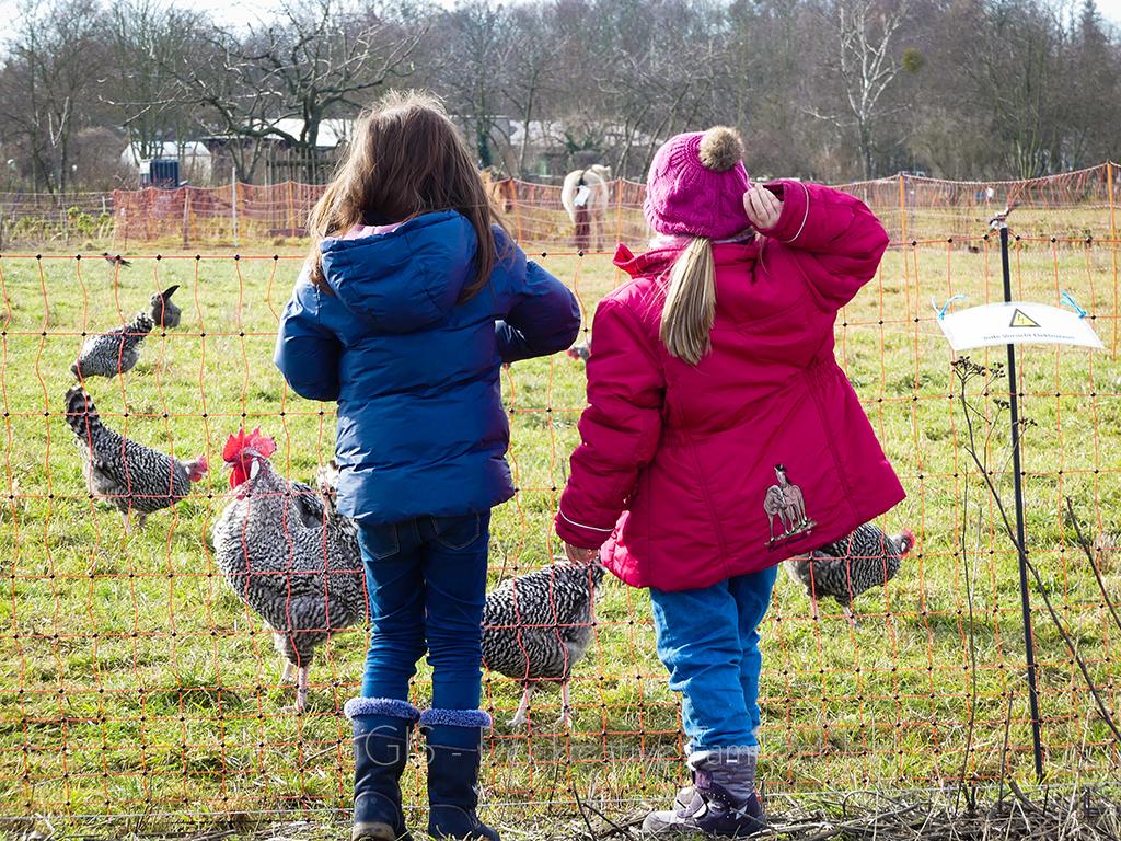 Hühner-füttern