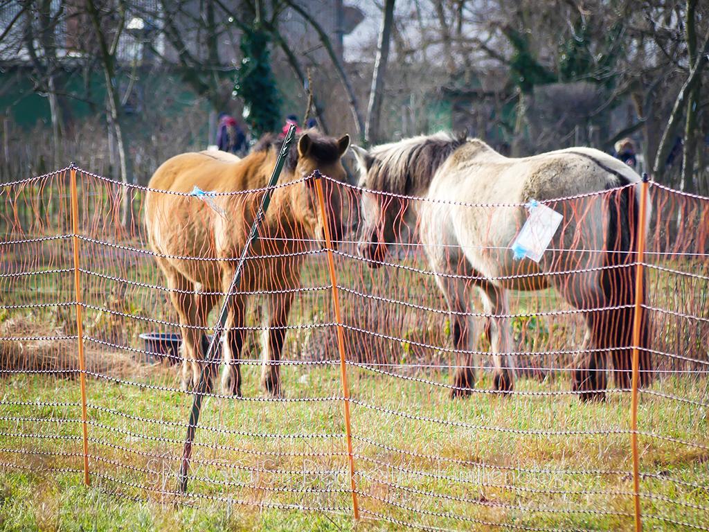 Pferde-draussen