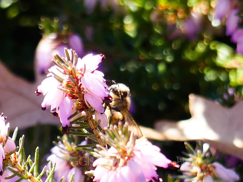 erste-Bienchen