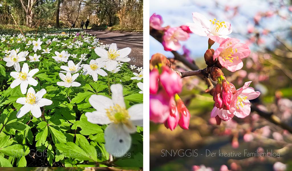 Frühlingsblüten