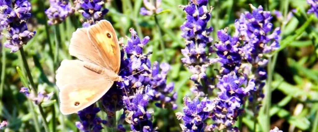 PicsArt_07-18-09.19.43.jpg